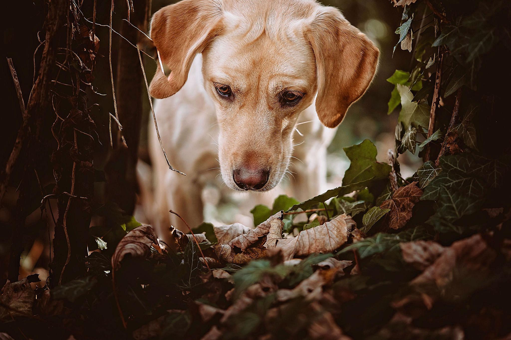 Sussex pet photographer