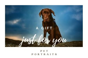gift card, gift vouchers, pet portraits, sussex pet photographer